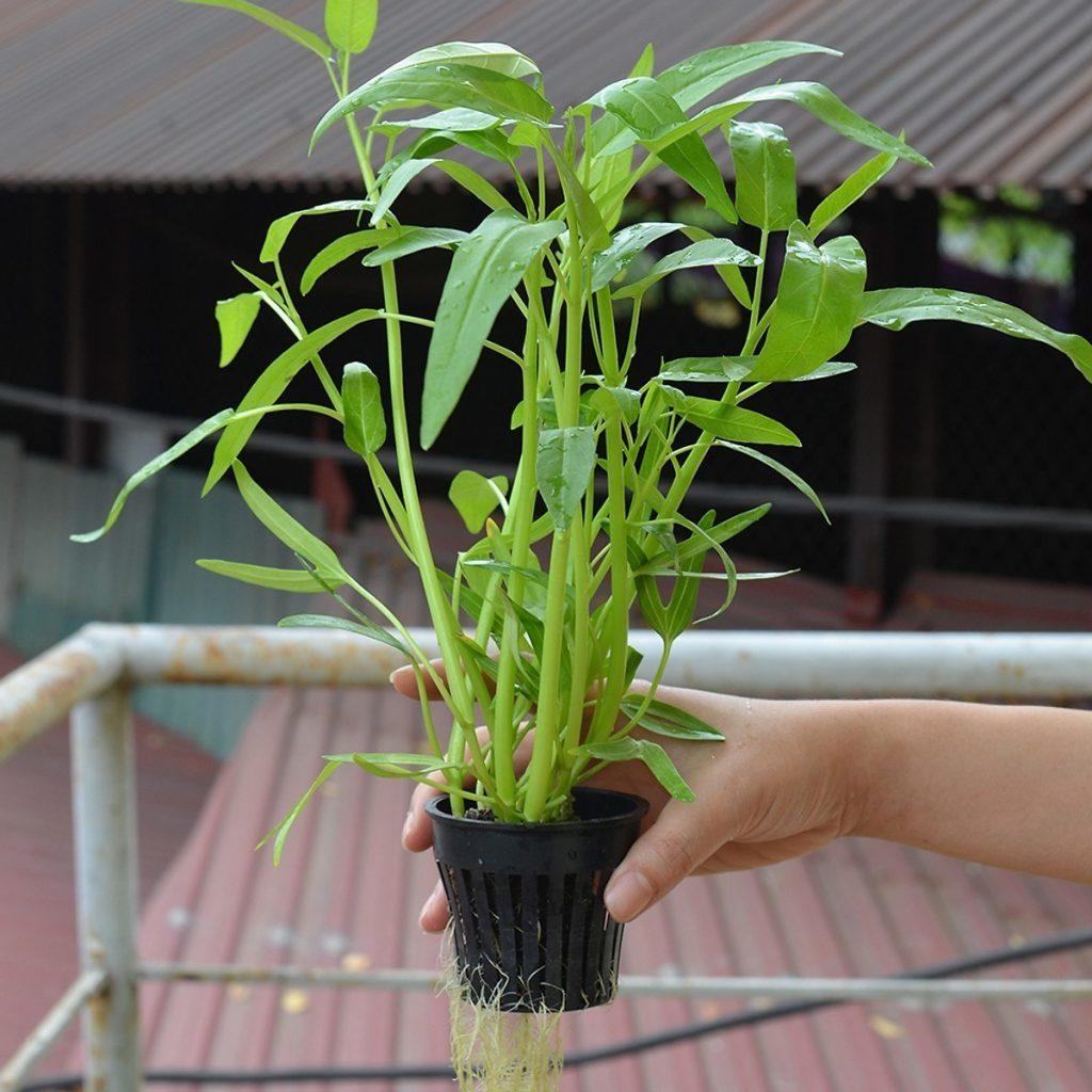 cung cấp rọ nhựa trồng rau